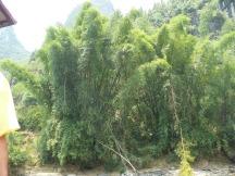 Guilin Yangshuo 1 095