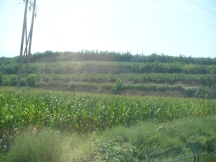 A better view of how the fields are terraced. There is no farming these fields with a combine.