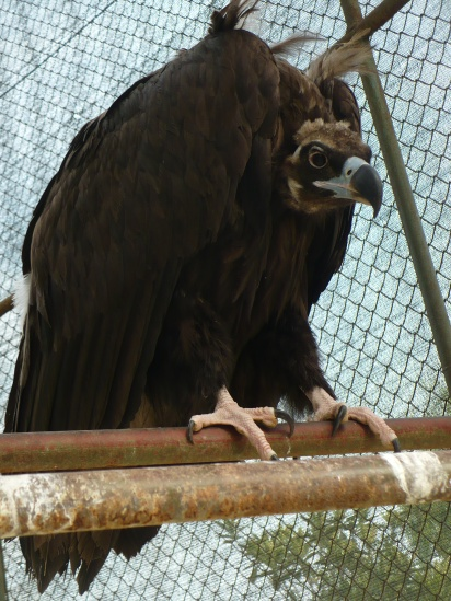 Vultures are terrifying
